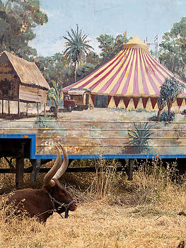 Pedro Cardona Llambias - circus circus 1 - A vintage circus wagon with african paint and a long horn bovine