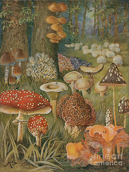 Science Source - Citizens Of The Land Of Mushrooms