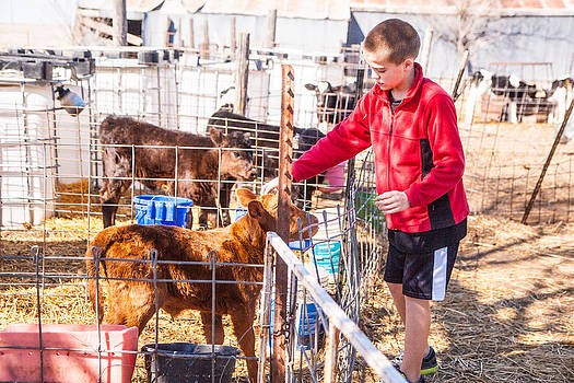 City kid bucket calf by Shirley Heier