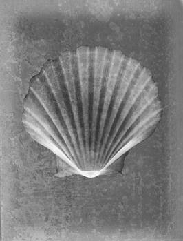 Roy Livingston - Clam Sea Shell X-ray Art