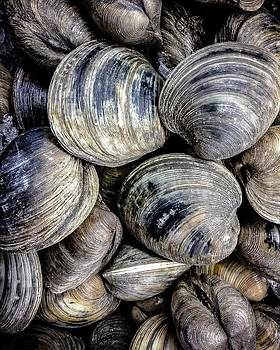 Clams before the chowder by Robert L Jackson