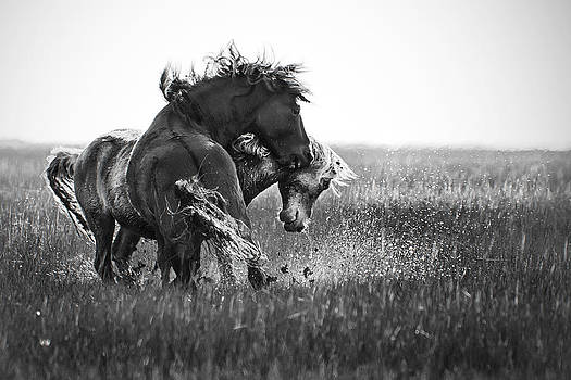 Clash of Two Wild Stallions by Bob Decker