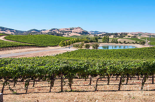 Jamie Pham - Classic Napa - Cuvaison Winery and vineyard in Napa Valley.