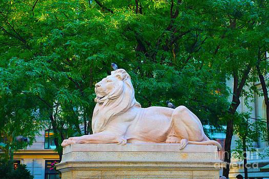 Clean Lion by Dan Hilsenrath