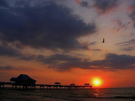 Clearwater Florida by David Sanchez