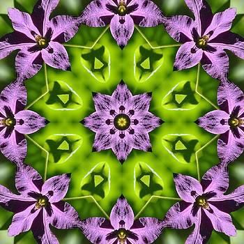 Valerie Kirkwood - Clematis Kaleidoscope