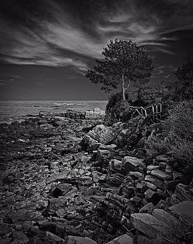 Cliff Walk - Winslow's Tree by Michael Berry