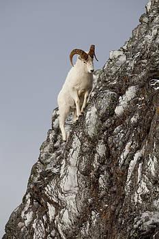 Tim Grams - Climbing an Icy Cliff