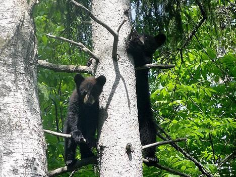 Climbing Cubs by Jody Benolken
