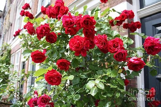 Danielle Groenen - Climbing Red Roses