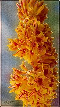 Roy Foos - Clockwork Orchid