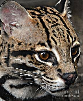 Up Close And Personal by Kathleen Struckle