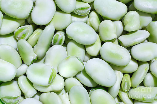 Gaspar Avila - Closeup of fresh fava beans
