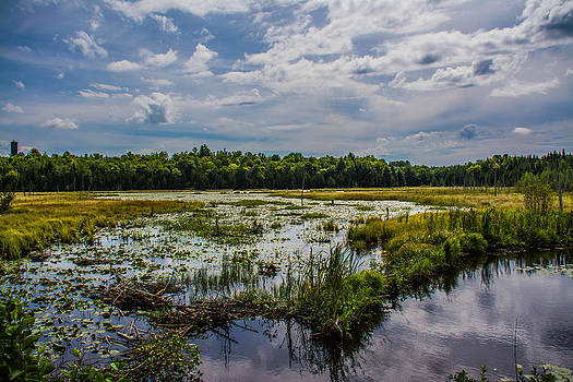 Cloud Reflection in Maine Marsh by Jason Brow