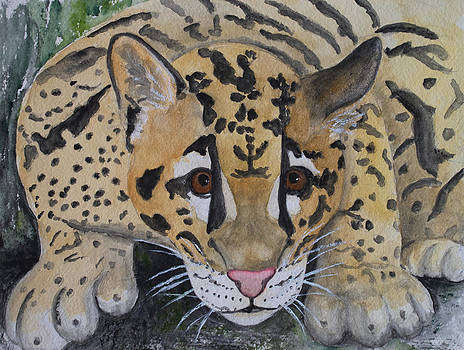 Patricia Beebe - Clouded Leopard