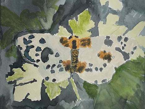 Clouded Magpie Watercolor On Paper by William Sahir House