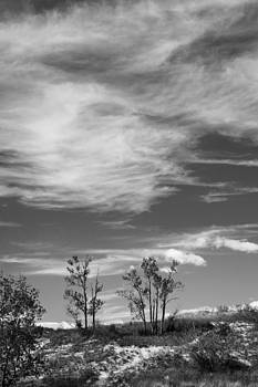 Clouds and Dune Trees BW by James Blackwell JR
