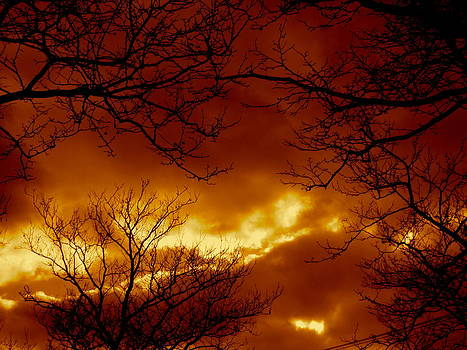 Cloudy And Red Through Branches by Kurler Warner