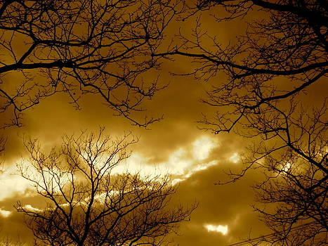 Cloudy And Sepia Through Branches by Kurler Warner