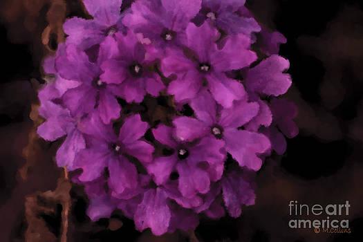 Amanda Collins - Cluster Of Lavender