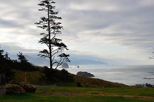 Coast Lone Tree by Linda Larson