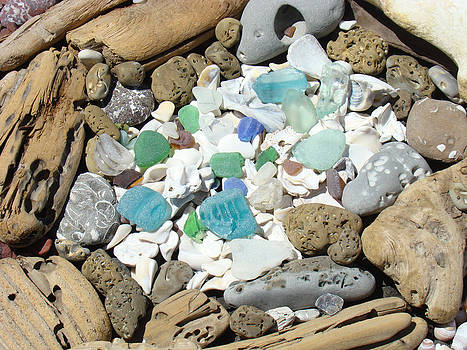Baslee Troutman - Coast Seaglass art prints Shells Fossils Driftwood