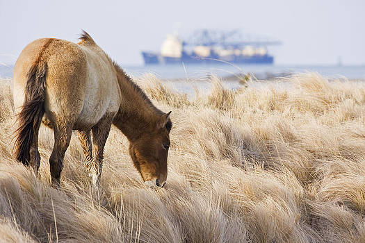 Coast Wild Horse with Ocean Going Freighter in Background by Bob Decker