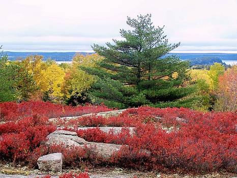 Gene Cyr - Coastal Autumn