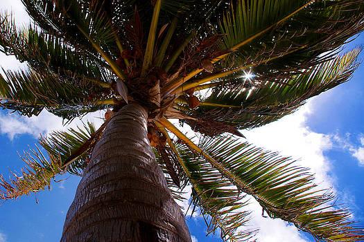 Sentio Photography - Coastal Belize Ambergris Caye 01