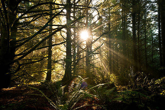 Coastal Forest by Andrew Kumler