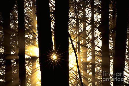 Art Wolfe - Coastal Forest