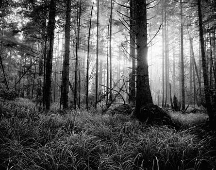 Coastal Forest Black and white by John Wolf
