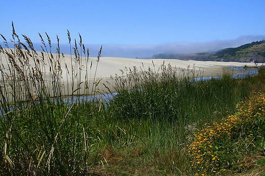 Coastal grasslands by Debra Kaye McKrill