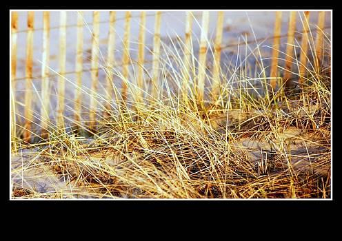 Rosemarie E Seppala - Coastal Living  Dune  Grass And Sand Fence