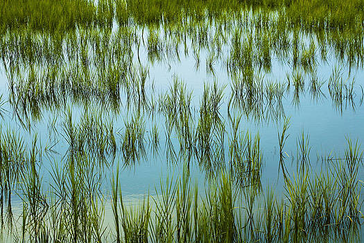 Marilyn Hunt - Coastal Marshland