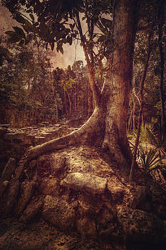 Coba Tree by Stuart Deacon