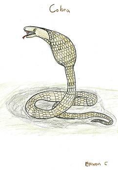 Cobra  by Ethan Chaupiz