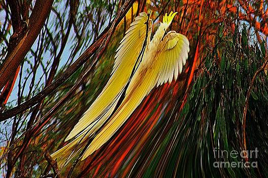 Cockatoo in abstract by Blair Stuart
