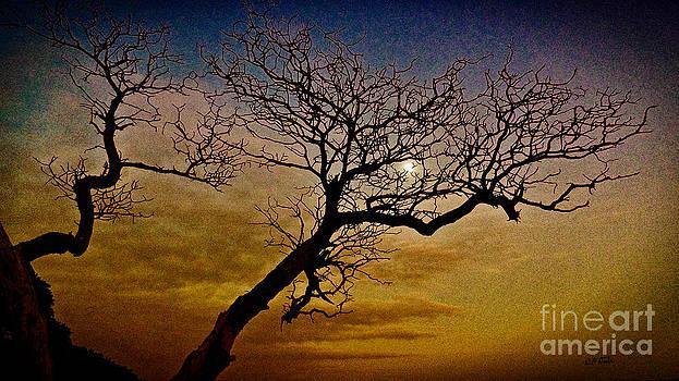 Charles Davis - Coconut Coast Moonrise
