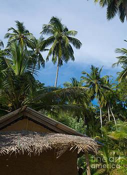 Coconut palm tree garden by Christina Rahm