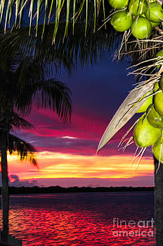 Coconut Sunset by Nancy Yuskaitis