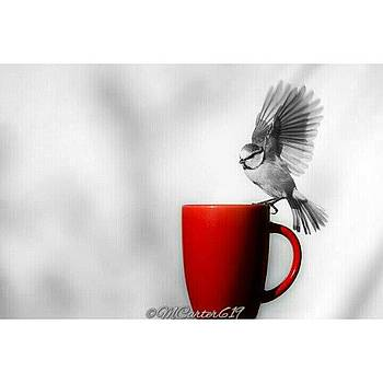 Coffee Thief!! #photooftheday by Mary Carter