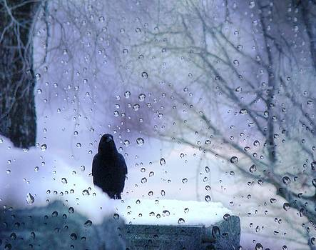 Gothicrow Images - Cold Crow