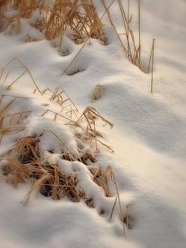 Dennis James - Cold Grass