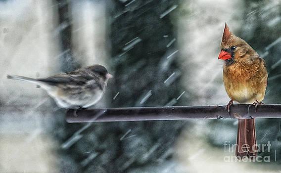 Cold Isn't It by Arnie Goldstein