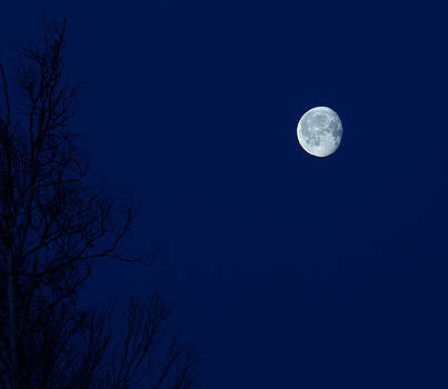 Cold Moon by Emily Henriques