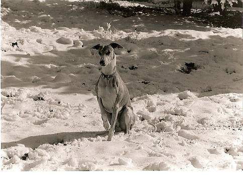 Cold Whippet by Jill Baum