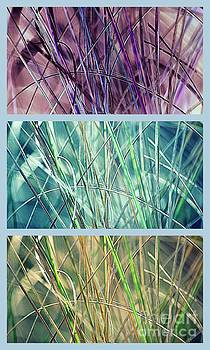 Susanne Van Hulst - Collage of See Grass