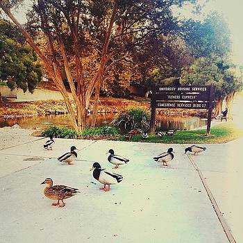 ...college (23) #college #duckpond by Tyrone Stokes