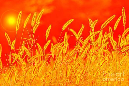Hermanus A Alberts - Color Art of Golden Grass
